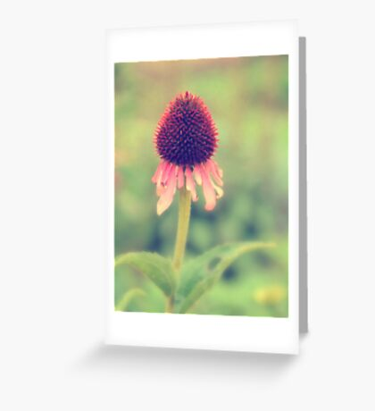 Beauty Fading ~ Flower. Greeting Card