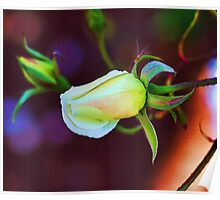 Abstract flowers drawing in pastel colors Take 11 Poster
