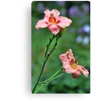 Daylilies - Elegant Candy Canvas Print