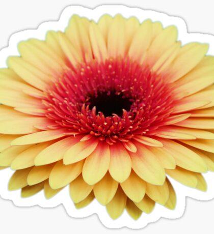 Gerbera 6 Sticker