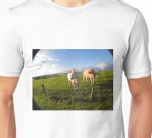 cows in sun Unisex T-Shirt