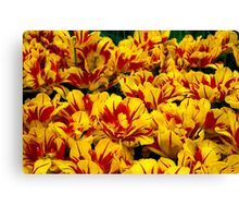 Yellow Tulips of Holland Canvas Print