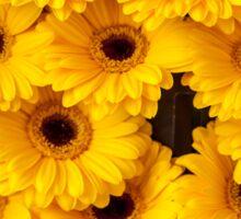 Yellow Gerbera. Amsterdam Flower Market Sticker