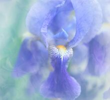 Painted Blue Iris by JennyRainbow
