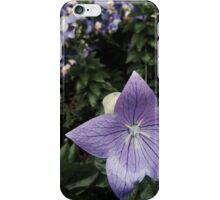Chinese Bellflower iPhone Case/Skin