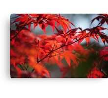 Tree in Passion. Japanese Maple Canvas Print