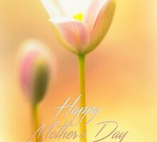 Mother's Day Greeting Card - Bloodroot Wildflower by MotherNature