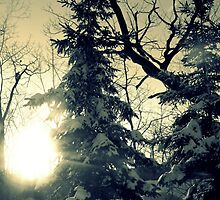 Winter trees by francelal