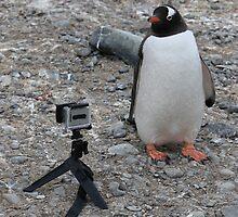 Gentoo penguin selfie in Antarctica  by Janai-Ami