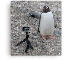 Gentoo penguin selfie in Antarctica  Metal Print