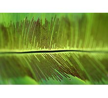 Solid fern - 2011 Photographic Print