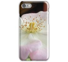 Single Petal Rose Reaching For The Sky iPhone Case/Skin