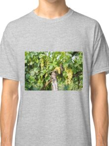A cluster of green grapes ripening on a grapevine Classic T-Shirt