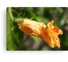 Yesterday's Golden Hibiscus Flower Canvas Print
