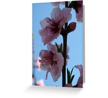Pastel Pink of Peach Tree Blossom Greeting Card