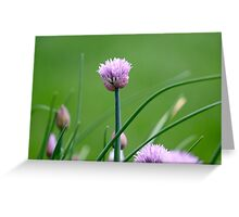 Macro Chive Blossoms 2 Greeting Card