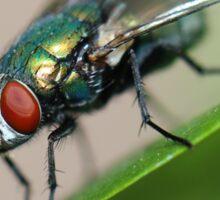 Iridescent Fly Sticker