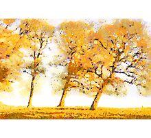 Somerset Trees Photographic Print