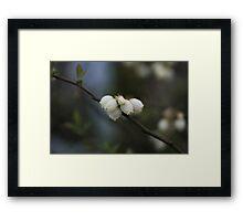 Blueberry Blossoms Framed Print