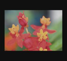Echeveria Succulent Red and Yellow Flower One Piece - Long Sleeve