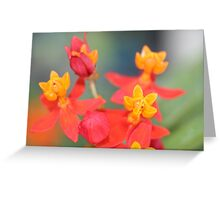 Echeveria Succulent Red and Yellow Flower Greeting Card