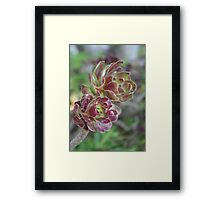 Close Up Of Aeonium Succulent With Garden Background Framed Print