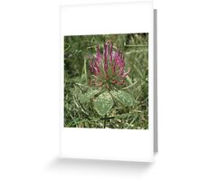 Turkish Rose Clover Greeting Card