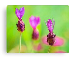 Lavender Bud Painting Canvas Print