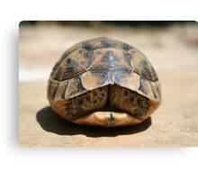 Tortoise Hiding In Its Shell  Canvas Print