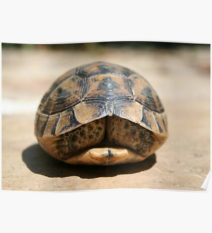 Tortoise Hiding In Its Shell  Poster
