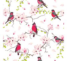 Red bullfinches on the magnolia tree vector seamless print Photographic Print