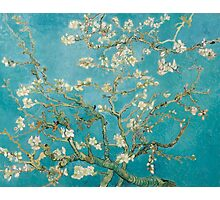 Vincent van Gogh - Branches of an Almond Tree in Blossom Photographic Print