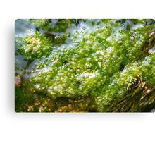 Green slime - 2010 Canvas Print