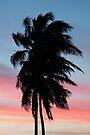 Palm-Tree Sunset by William C. Gladish