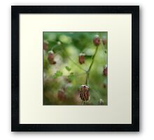 Droopy flower - 2011 Framed Print