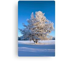 Tree in sunshine in Jamtland, Sweden Canvas Print