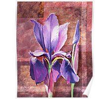 Decorative Iris Poster