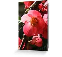 Pink flower - 2011 Greeting Card