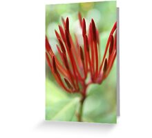 Red buds - 2011 Greeting Card