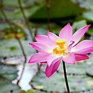Lovely Lotus by Kasia-D