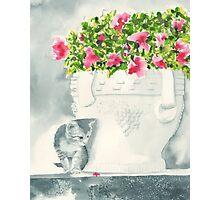 Office Kitten Photographic Print