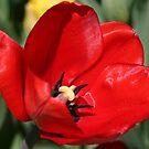 Reddy for Spring by Monnie Ryan