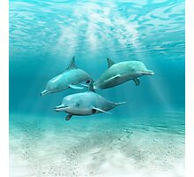 Swimming Dolphins Photographic Print