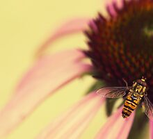 Hoverfly by Jam-Gloom