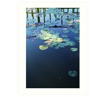 Lily pad on water - 2013 Art Print