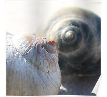 Sea snail shell in profile - 2016 Poster