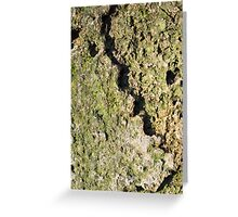 Old boulders with moss Greeting Card