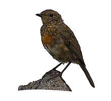 Bird on a Rock Photographic Print