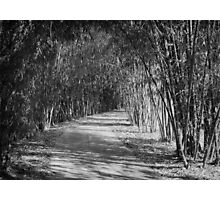 Bamboo Path Photographic Print