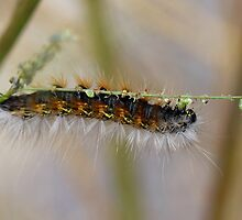 Hang in There Fuzzy Caterpillar 1 by ReidSmith
